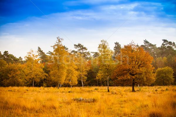 Kleurrijk najaar landschap mooie bos hemel Stockfoto © EwaStudio