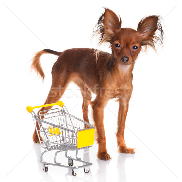 Toy Terrier with shopping cart isolated on white. Funny little d Stock photo © EwaStudio
