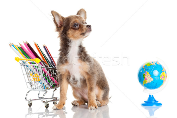 Stock photo: dog with pencil and globe