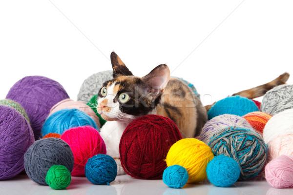 Foto d'archivio: Cat · bianco · gattino · sfondo · divertimento