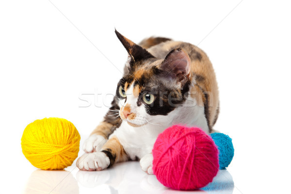 Cat Devon Rex on white background. kitten with balls of threads  Stock photo © EwaStudio