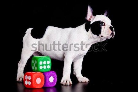 Französisch Bulldogge schwarz Porträt Spielzeug Kopf Stock foto © EwaStudio