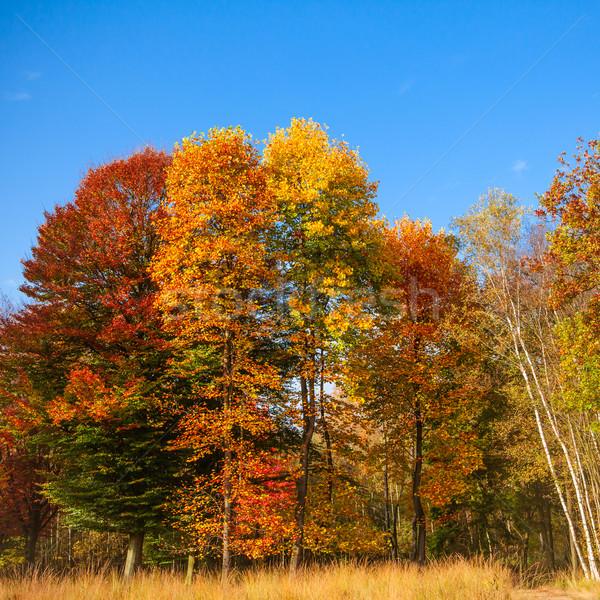 осень пейзаж дерево лес лист фон Сток-фото © EwaStudio