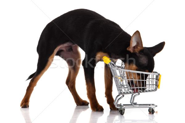 Cão carrinho de compras vermelho preto branco animal Foto stock © EwaStudio
