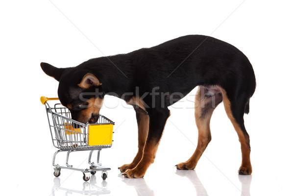 Foto stock: Cão · carrinho · de · compras · vermelho · preto · branco · animal