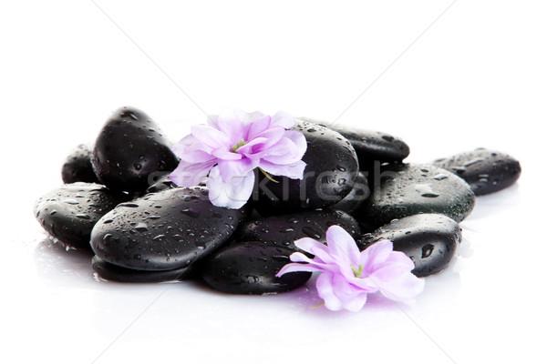 Foto stock: Spa · piedras · aislado · flor · blanca · piedra