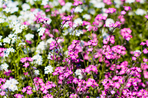 Gyönyörű színes virágok mező természet levél Stock fotó © EwaStudio