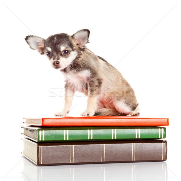 犬 図書 子犬 背景 研究 面白い ストックフォト © EwaStudio