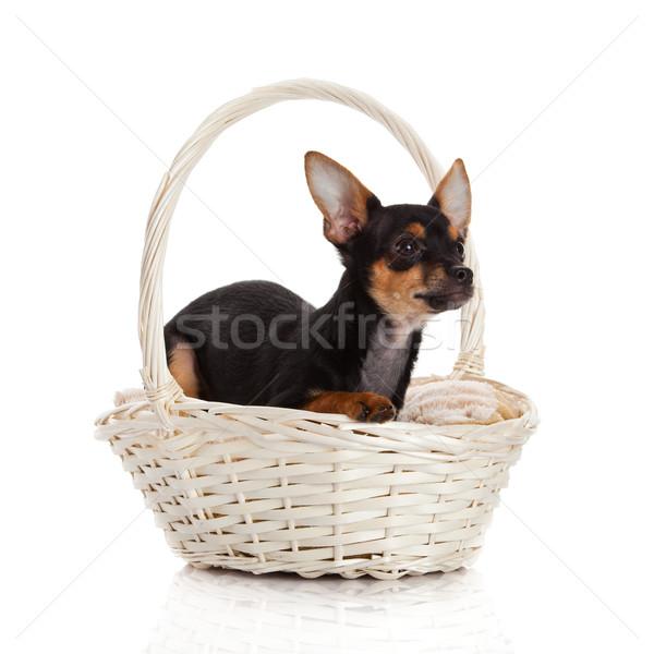 Cesta beleza diversão animal apresentar cachorro Foto stock © EwaStudio