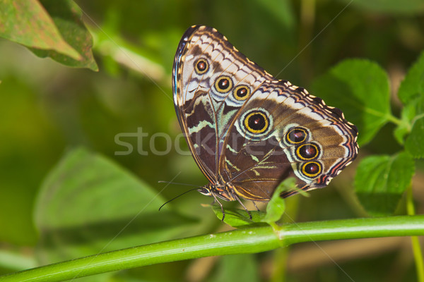 Vlinder mooie vergadering boom gras tuin Stockfoto © EwaStudio