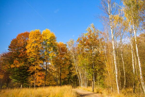 Schönen Herbst farbenreich Landschaft Himmel Wald Stock foto © EwaStudio