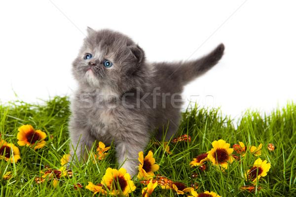 Kicsi kiscica fehér háttér vicces fiatal Stock fotó © EwaStudio
