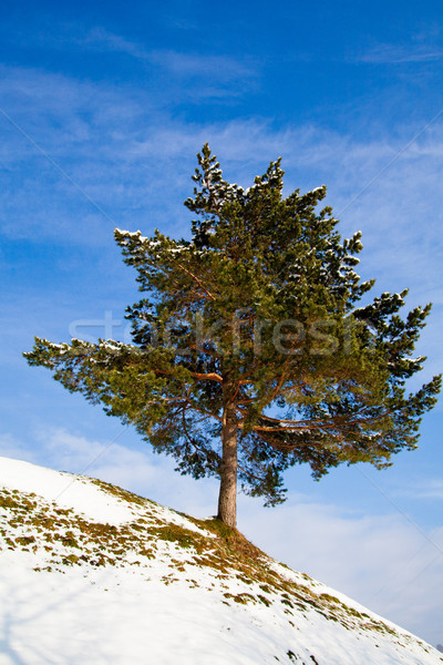Inverno paisagem belo montanhas céu natureza Foto stock © EwaStudio