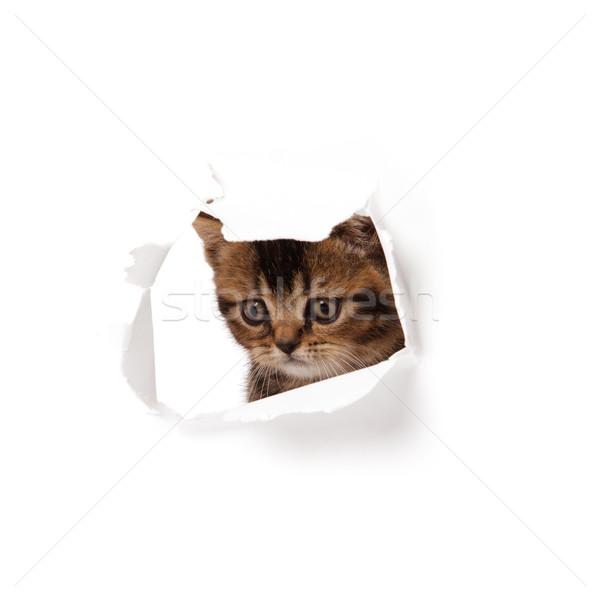 kitten looking up in paper. Stock photo © EwaStudio