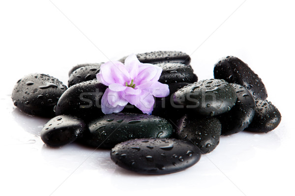 Spa stones and purple flower, isolated on white. flower in stone Stock photo © EwaStudio