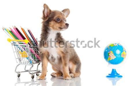 Cão lápis globo escritório escolas caneta Foto stock © EwaStudio