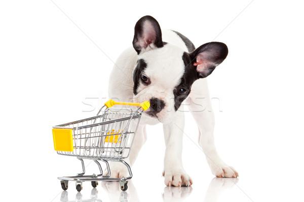 French Bulldog with shopping cart isolated on white. Funny littl Stock photo © EwaStudio