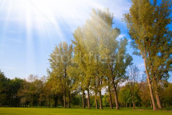 Zöld mező fák fa tavasz fű Stock fotó © EwaStudio