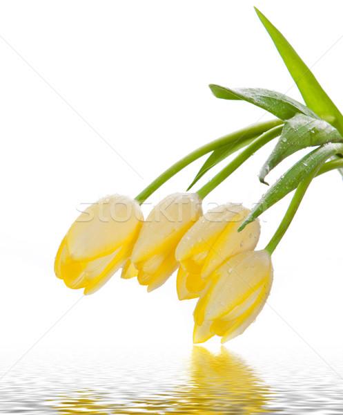 Mooie boeket Geel tulpen witte Pasen Stockfoto © EwaStudio