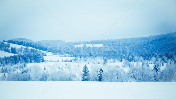 Beautiful winter landscape Stock photo © EwaStudio