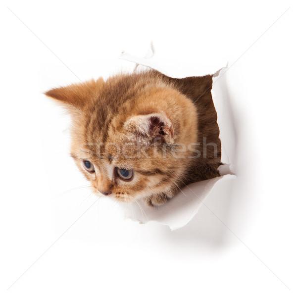 Kiscica felfelé néz papír macska fal vicces Stock fotó © EwaStudio