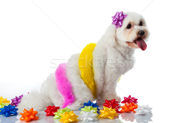 Adorável cão branco cabelo pintar pintor Foto stock © EwaStudio