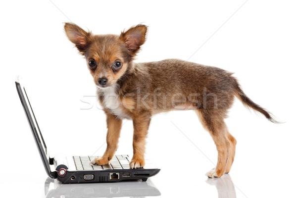 Portré aranyos kutya laptop fehér számítógép Stock fotó © EwaStudio