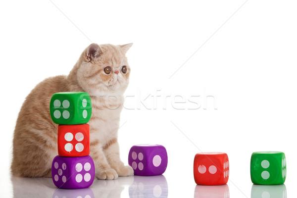 Exotisch korthaar kat cute kitten spelen Stockfoto © EwaStudio