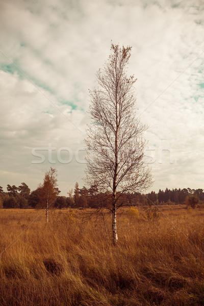 Landscape with autumn forest.  Stock photo © EwaStudio