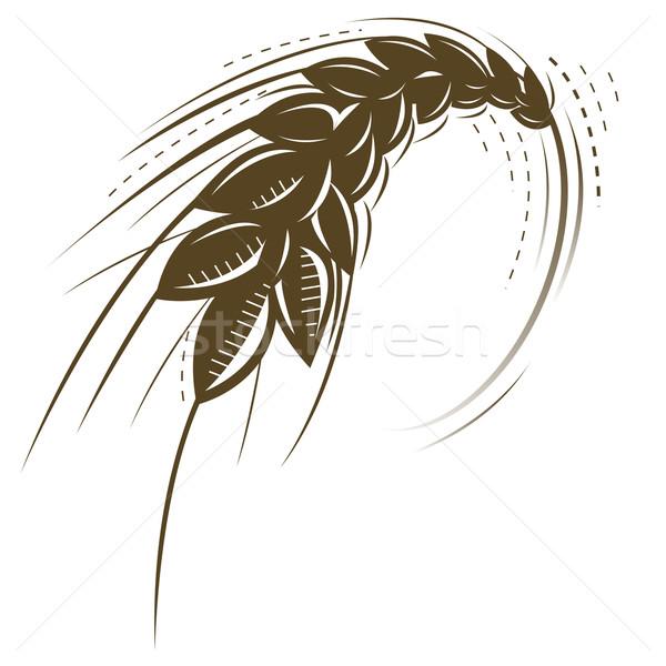 Trigo icono vector aislado naturaleza fondo Foto stock © exile7