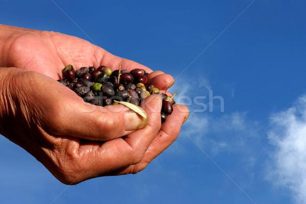 Olijven handen blauwe hemel hemel natuur veld Stockfoto © exile7