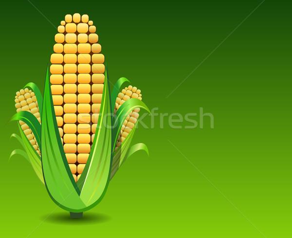 Maíz ilustración verde fondo agricultura vegetales Foto stock © exile7