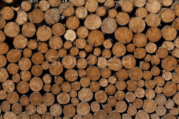 Stock fotó: Boglya · tűzifa · különleges · fa · kész · természet