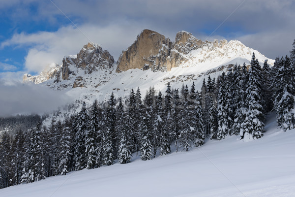 Kış manzara pastoral panorama orman kar Stok fotoğraf © faabi