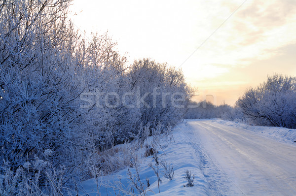 Snowy country lane. Stock photo © fanfo