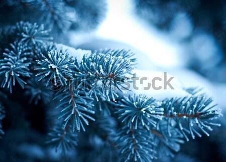 Hiver gel épinette arbre arbre de noël Photo stock © fanfo
