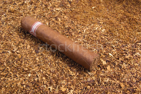 one cuban cigar ,disposit of the tobacco Stock photo © fanfo