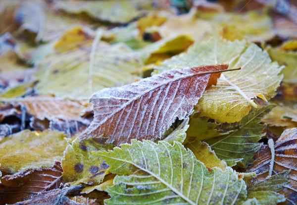 Gelo colorato erba giardino sfondo Foto d'archivio © fanfo