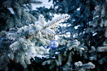 Winter vorst sparren boom ondiep Stockfoto © fanfo