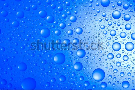 water drops over blue background Stock photo © fanfo