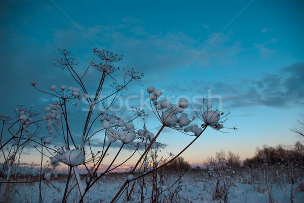 Téli tájkép tél fa természet hó szépség Stock fotó © fanfo