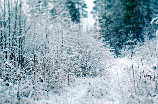 Téli tájkép ágak virág fa természet hó Stock fotó © fanfo