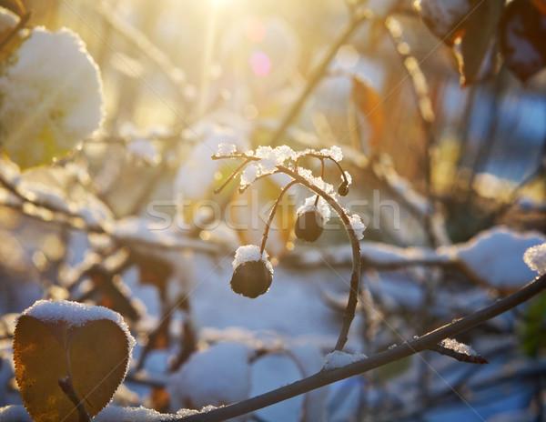 Sonbahar yaprakları don renkli çim bahçe arka plan Stok fotoğraf © fanfo