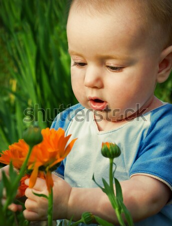 tot looks at flower Stock photo © fanfo