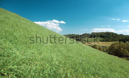 Miraculous year landscape with hill Stock photo © fanfo