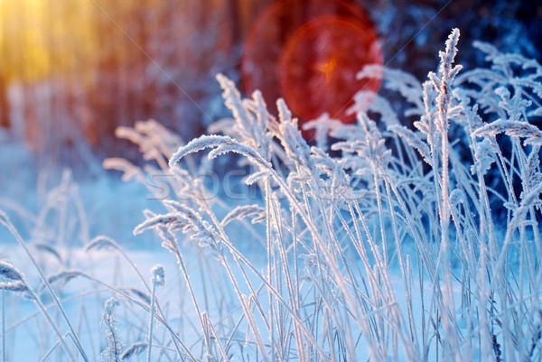 Téli tájkép virág fenyőfa erdő naplemente fa Stock fotó © fanfo