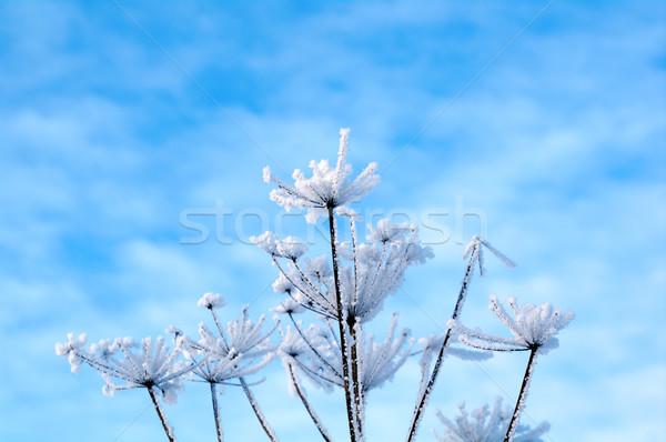 Invierno escena naturaleza nieve belleza hielo Foto stock © fanfo