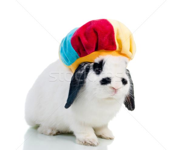 Cute Пасху кролик тесные белый фон Сток-фото © fanfo