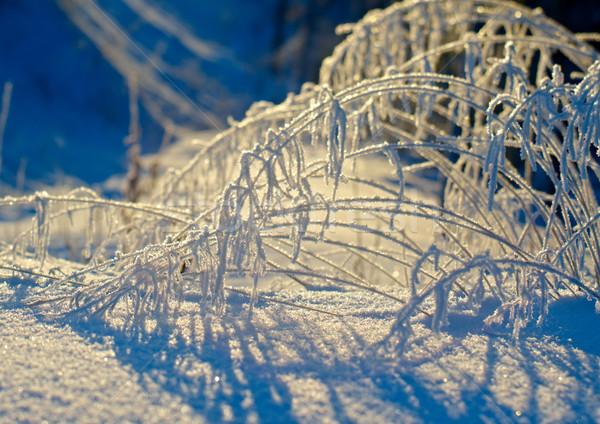 Tél tájkép szépség jelenet égbolt virág Stock fotó © fanfo