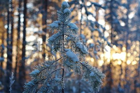 winter landscape .Winter scene  Stock photo © fanfo